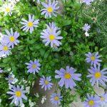 夏のガーデニング!お庭を涼しく演出しよう!