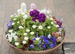 レイアウト自在で気軽に模様替え! 鉢植えで庭に彩りを
