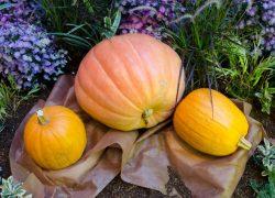秋冬のイベントをお庭で表現