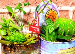かわいい多肉植物